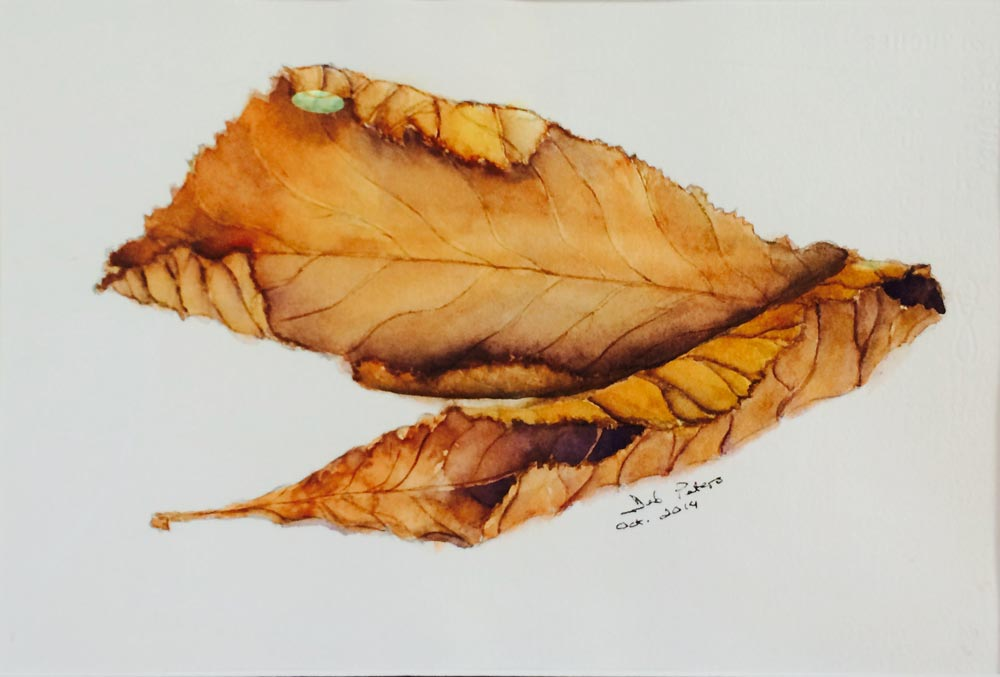 Leaf Study 14 X 18 Watercolour Framed